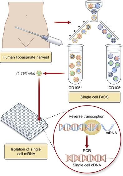 Basic Principles in Flow Cytometry