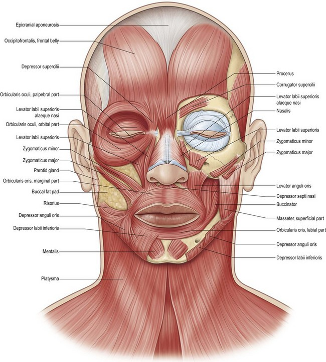 facial paralysis | plastic surgery key, Human Body
