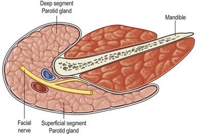 Salivary gland tumors | Plastic Surgery Key