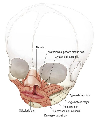 Secondary Deformities Of The Cleft Lip Nose And Palate Plastic
