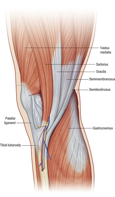 Comprehensive Lower Extremity Anatomy Plastic Surgery Key