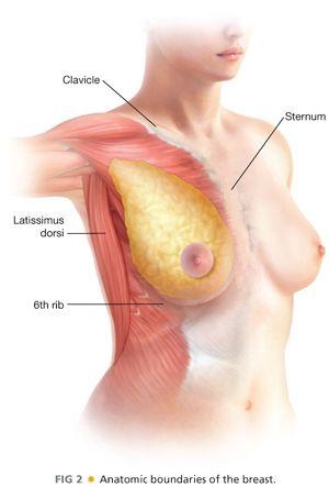 Breast tissue boundaries in dating 6