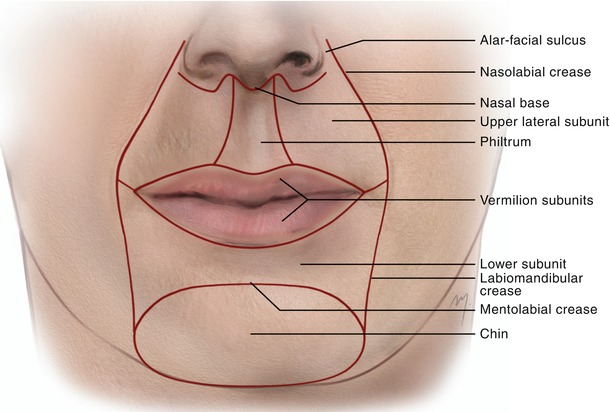 topographic anatomy of face The superior and inferior labial veins, deep facial vein, and angular vein from the   anatomical variation facial vein external jugular vein  topographic de.