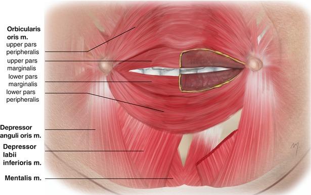 lips and chin | plastic surgery key, Human Body