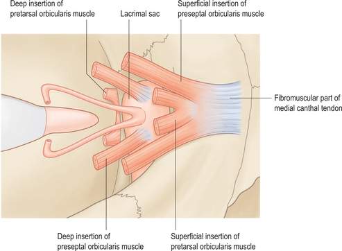 Eyelid And Midcheek Anatomy Plastic Surgery Key