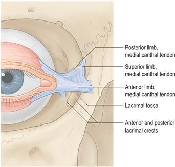Lower limb anatomy video