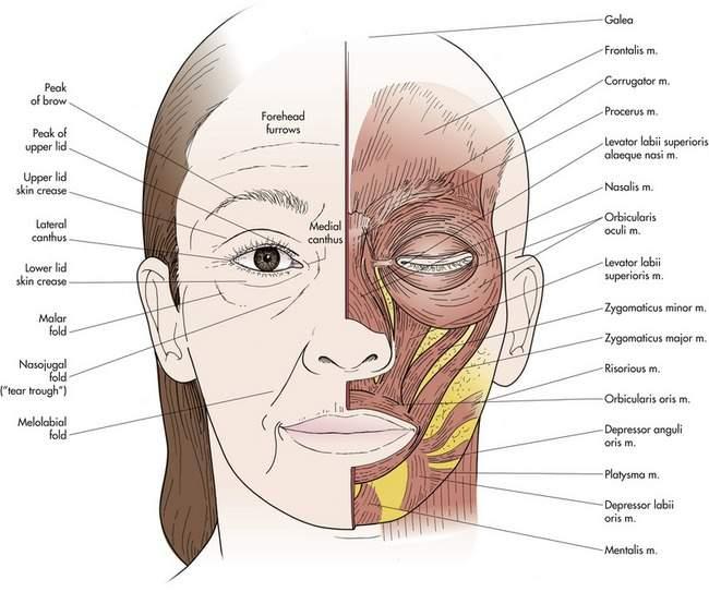 Clinical Anatomy Plastic Surgery Key