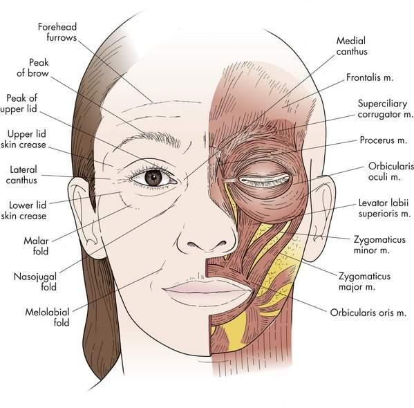 Causes of facial myokymia