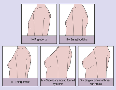 boob stages