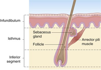 structure and function of newborn skin plastic surgery key