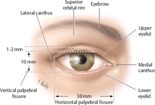 Eyelid Anatomy | Plastic Surgery Key