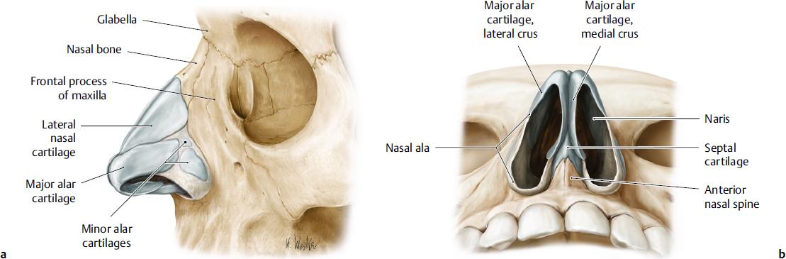 External Nose Plastic Surgery Key