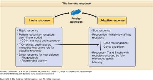 compare the differences between innate and adaptive immunity Difference between active and passive immunity  innate immunity and adaptive or acquired immunity  maintained by major differences.
