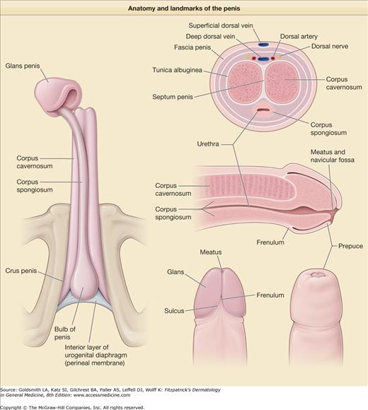 Male Genital Dysaesthesia : Male Genital Dysaesthesia ...