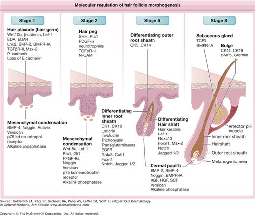 biology of hair follicles plastic surgery key