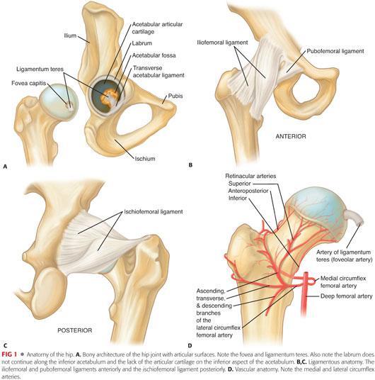 Arthroscopy: The Basics | Plastic Surgery Key