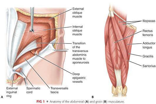 Pubalgia And Adductor Injuries Plastic Surgery Key