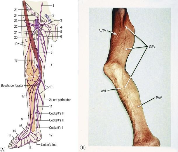 Anatomy | Plastic Surgery Key