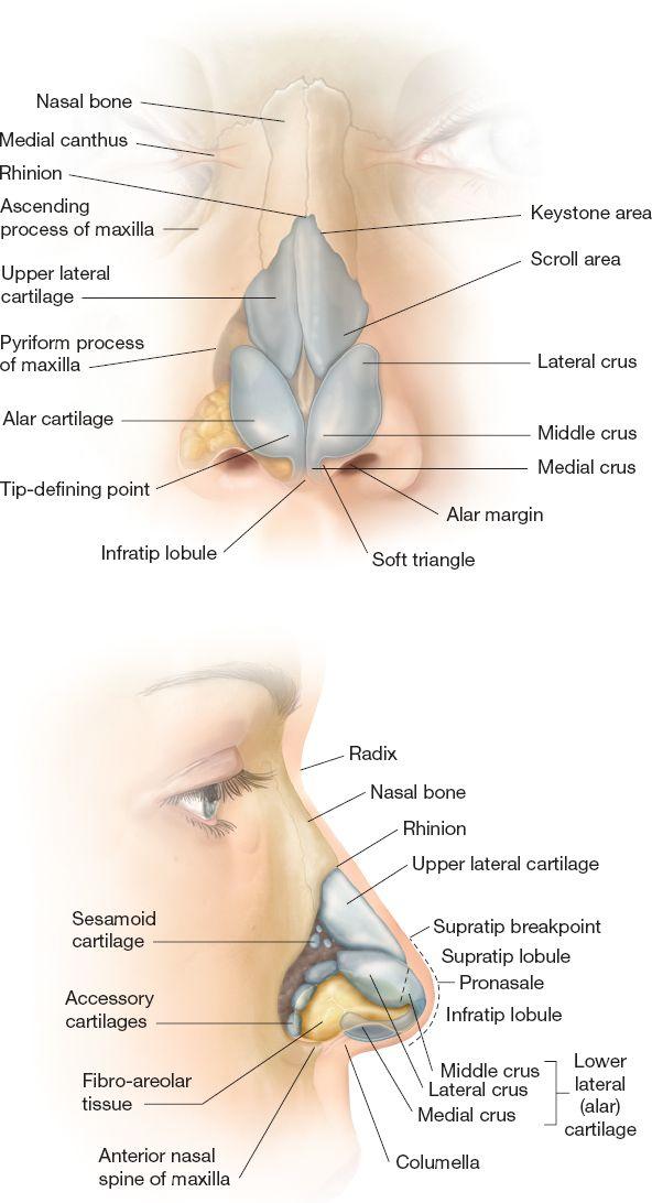 Rhinoplasty | Plastic Surgery Key