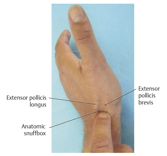 Surface Anatomy Of The Forearm Wrist And Hand Structures Plastic